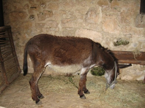 WordlessDonkey